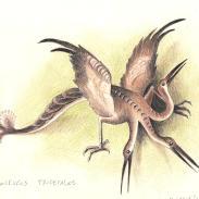 Ardéolo tricéfalo
