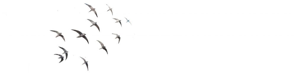 2ª Edición de la Guía de aves del Jardín de las delicias