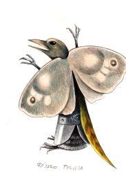 Pájaro polilla